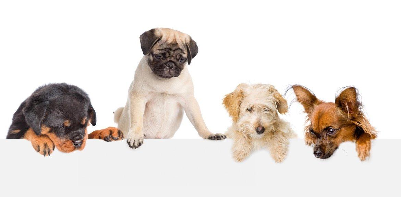 Honden-speelgoed