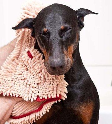Honden Handdoek - Beige - 80 x 35 cm - Dogs&Co